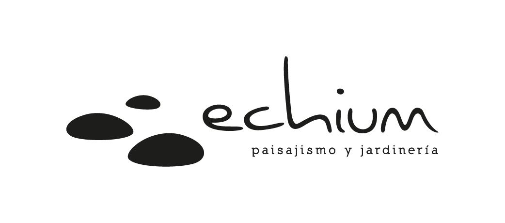 Echium Tenerife